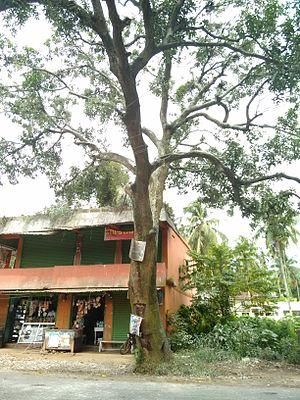 Heronry - Heronry at Calicut, India