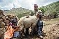 Kurmanji woman milking a sheep, North Khorasan, Iran 13970504.jpg