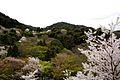 Kyoto hillside.jpg