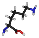 L-lysine-3D-sticks.png