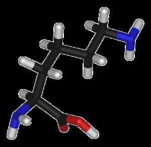 Lysine (data page) - 3D structure of L-lysine
