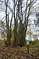 LSG Sudmerberg - Herbstwald (7).jpg