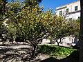 La Seu, 07001 Palma, Illes Balears, Spain - panoramio (50).jpg