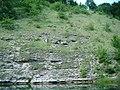 Lacul Cozia (zona de baie) - panoramio.jpg