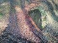 Lager Herbstwald.jpg