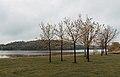 Lake Byllesby Trees, Minnesota - Dakota County Parks (41669092744).jpg