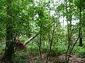 Landschaftsschutzgebiet Horstmanns Holz Melle -Umgestürzter Baum- Datei 1.jpg