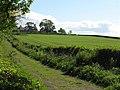 Lane to Newton - geograph.org.uk - 1298245.jpg