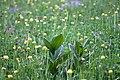 Lans-en-Vercors-4310 - Flickr - Ragnhild & Neil Crawford.jpg