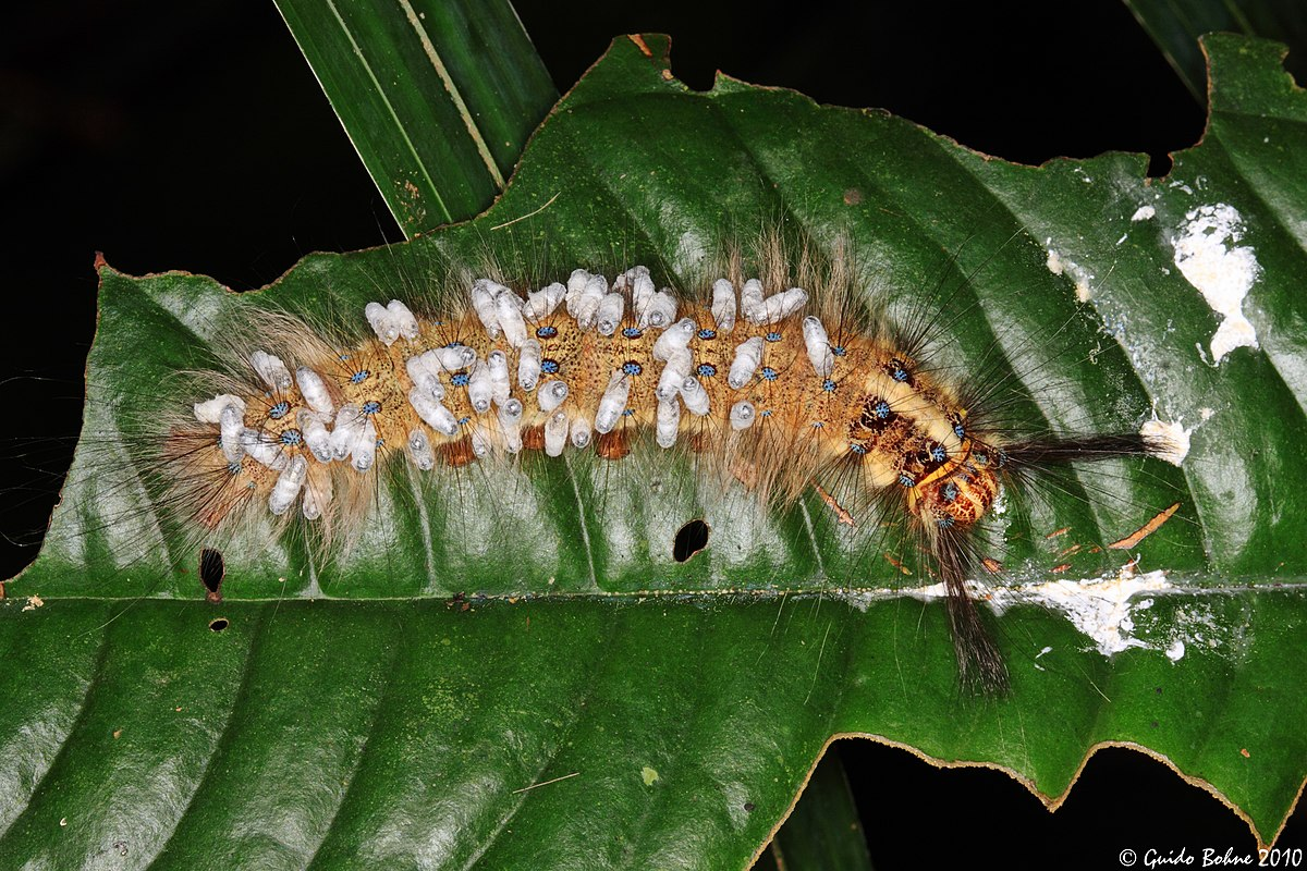 catalpa worm and wasp larvae relationship problems