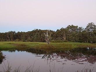 Julatten, Queensland - Lascar Abattoir Swamp, Julatten, 2008