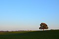 Late Afternoon In The Green Fields (37546026).jpeg