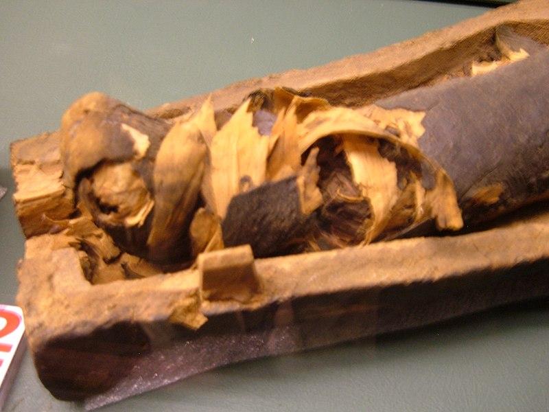 File:Late Period corn mummy 4 REM.JPG