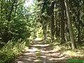 Leśna droga w okolicach Piły - panoramio (1).jpg