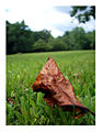 Leaf on Grass, Cherry Hill, NJ 2004.jpg