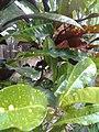 Leaves and trees palavangudi jpg 07.jpg