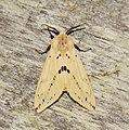 Lepidoptera (33560938782).jpg