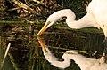 Leroy, WI, USA - panoramio - NaturesFan1226 (7).jpg