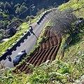 Levada Wanderungen, Madeira - 2013-01-10 - 85900224.jpg