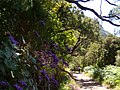 Levada do Risco, Madeira, Portugal, June-July 2011 - panoramio (32).jpg