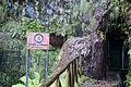 Levadas do Risco e 25 Fontes, Madeira - Aug 2012 - 01.jpg