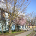 Liceo San Pedro Frontis 2.png