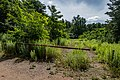 Liebiadziny reserve (Belarus) 01.jpg