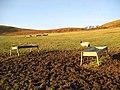 Livestock field - geograph.org.uk - 638694.jpg
