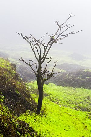 Lonavla - A place near Tiger Point