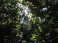 Luzes penetram em meio a Trilha da Pedra Grande.jpg