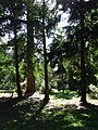 Lynford Arboretum - geograph.org.uk - 537314.jpg