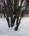 Lyovintsy, Kirovskaya oblast', Russia, 612079 - panoramio (63).jpg