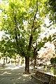 MADRID A.V.U. JARDIN PLAZA PEÑUELAS - panoramio (1).jpg