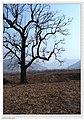 Maiji, Tianshui, Gansu, China - panoramio (3).jpg