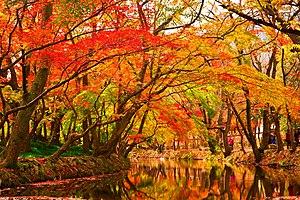 Maple Trees by Creek.jpg