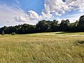 Meadow of daisies, Taunusstein.jpg