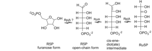 Ribose-5-phosphate isomerase