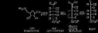 Ribose-5-phosphate isomerase - Image: Mech 2