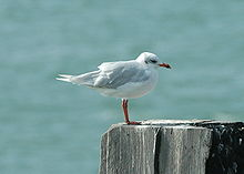 Med gull southend.JPG