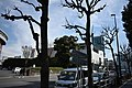 Meiji Jingu Stadium 2019e.jpg