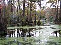 Merchants Millpond SP NC 5583.jpg