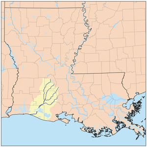 Bayou Nezpique - Map of the Mermentau River watershed showing the Mermantau River and its 4 largest tributaries (from left to right) River Nezpique, Bayou des Cannes, Bayou Plaquemine Brule, and Bayou Queue de Tortue.
