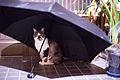 Mew, I'm ready for rainy season (7376998916).jpg