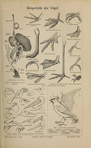 Vögel – Wikipedia