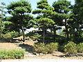 Mikasayama (Hibiya Park)1.jpg