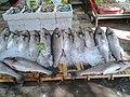 Minekop (huge fish).jpg