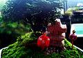 Mini bonsai.jpg