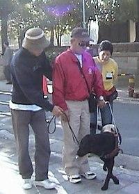 Guide Dog Simple English Wikipedia The Free Encyclopedia