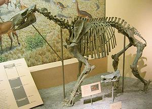 Chalicothere - Moropus elatus at the National Museum of Natural History,  Washington, DC