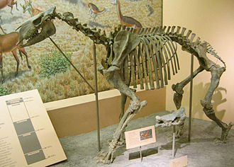 Chalicothere - Moropus elatus at the National Museum of Natural History,  Washington, DC
